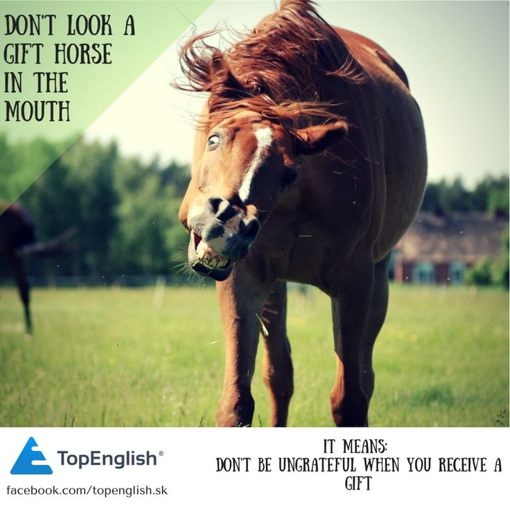 dont look a gift horse in the mouth - english idiom