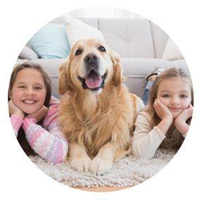 Vous avez des enfants ou un animal de compagnie et cherchez un tapis ? Venez vite découvrir nos conseils pour bien le choisir ici.  #tapis #enfanttapis #animaltapis #tapisenfant #tapisanimal #tapisdesign #conseildéco #tendance #cocoon