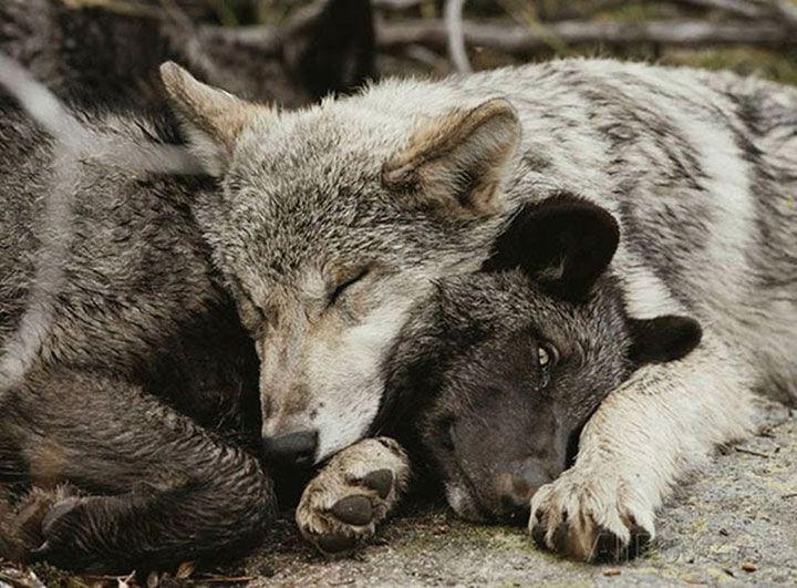 75 animaux endormis qui se prennent pour des oreillers