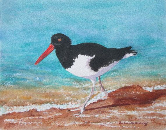 Sassy beach bird art print of original watercolor painting, Oystercatcher, by Barbara Rosenzweig. Click to Buy Now.