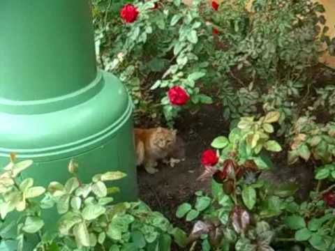 I Had No Idea That Disneyland Supported Feral Cats At The Park! What An Incredible Idea! | The Animal Rescue Site Blog