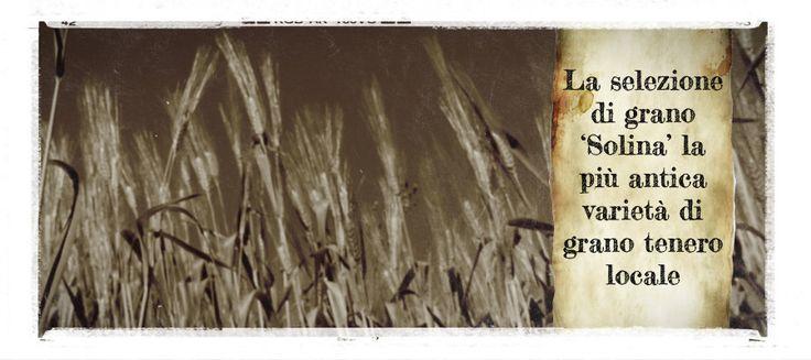 """La Solina La """"Solina"""" è un particolare tipo di grano tenero coltivato in alcuni Comuni montani della provincia dell'Aquila, localizzati all'interno del territorio del Parco …"""