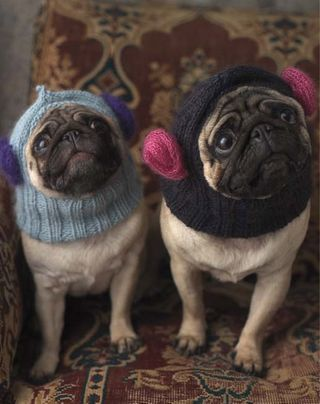 Pug Balaclava Knitting Pattern : 17 Best images about everything else on Pinterest Baby ...