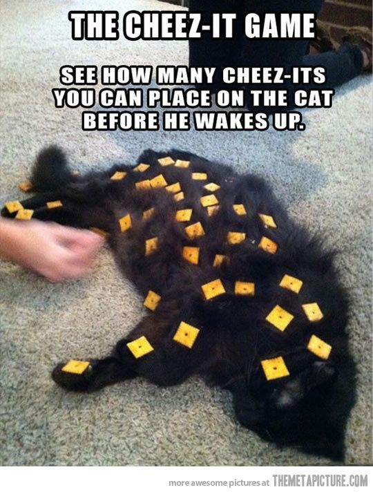 Can You Give Dogs Cheezits