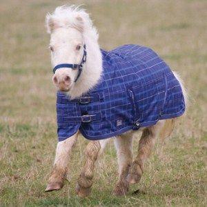 Highlander Horse Shires Miniature Turnout Rug The Tack Shack Rugs