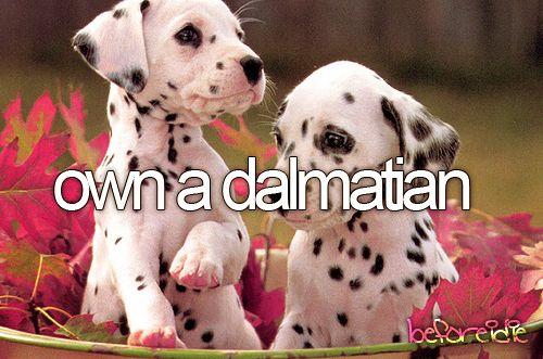 Own a dalmatian.