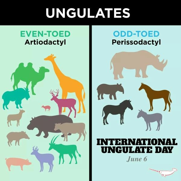 Ungulate Zoo 17 Best images ...