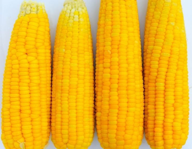 Smart Tip: The Fastest, Easiest Way to Shuck Corn Is With Your Microwave — America's Test Kitchen