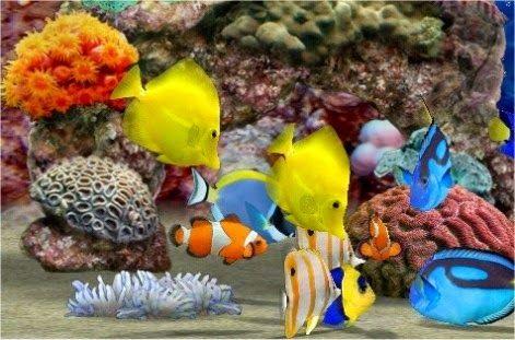 40 Awesome jenis ikan akuarium images