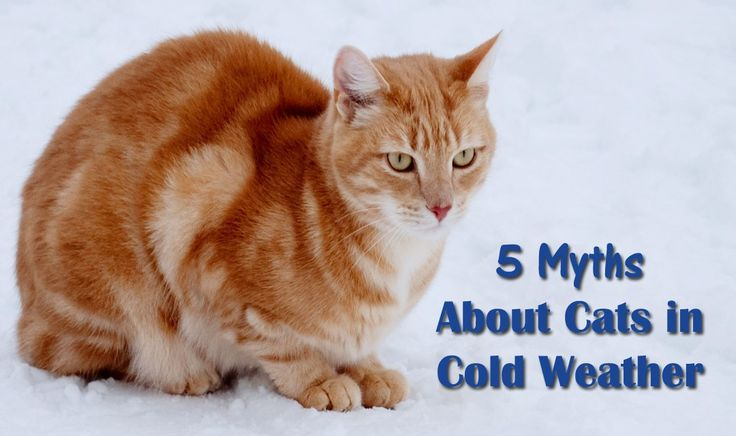 5 Myths About Cats and Cold Weather
