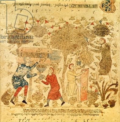 medieval beekeeping from the Vatican Library archives