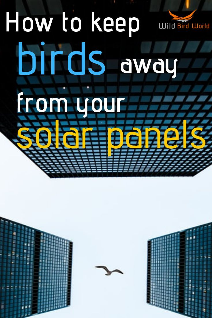 How To Stop Birds From Nesting Under Solar Panels With Images World Birds Solar Panels Birds