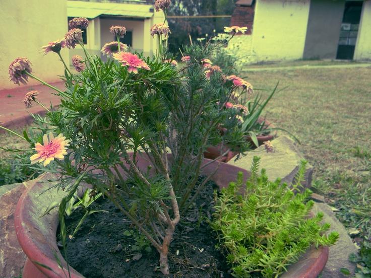 Flores en vasijas de barro.