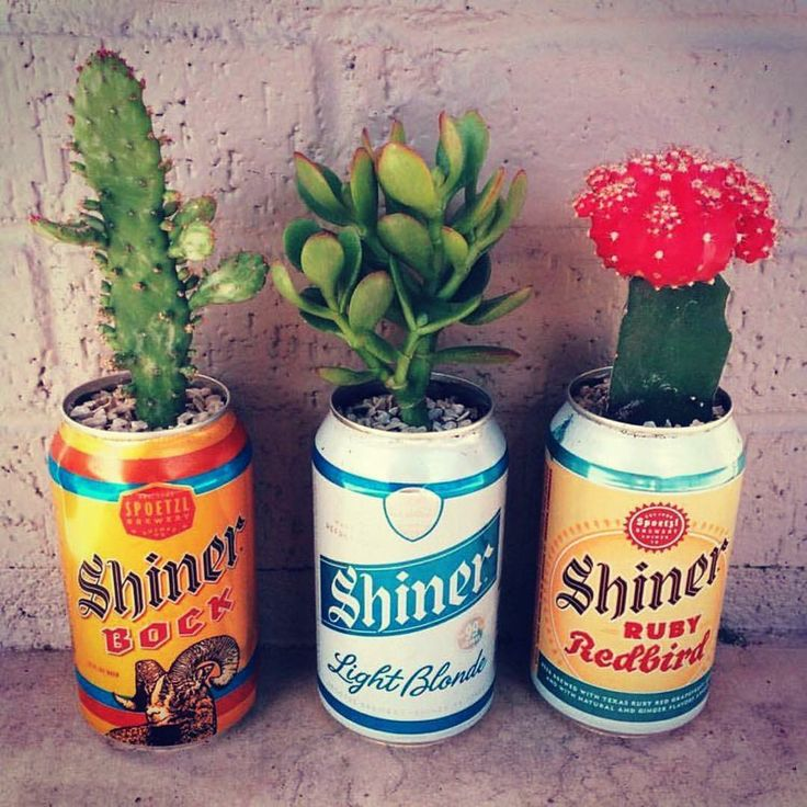 Shiner can cactus planters