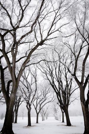 Fotografie in bianco e nero di paesaggi innevati Poster su AllPosters.it