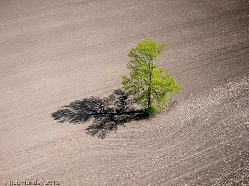 Lone tree in a newly seeded corn field. Richmond, Ontario dairy farm - Kite Aerial Photography (KAP) by Rob Huntley