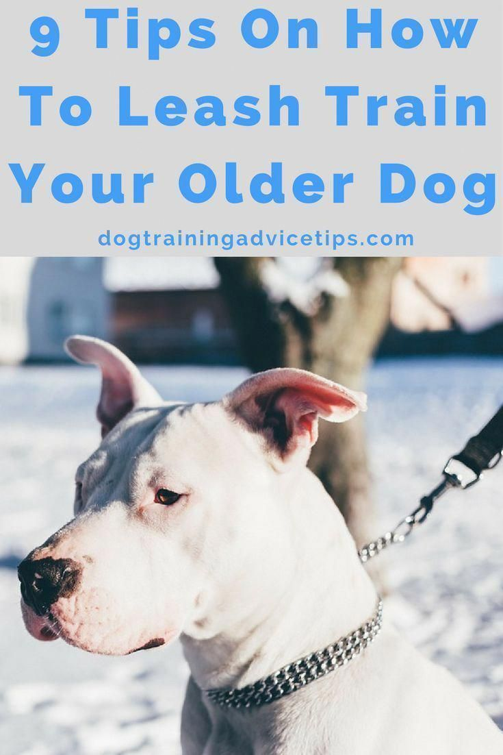 9 Tips On How To Leash Train Your Older Dog Leash Training Dog