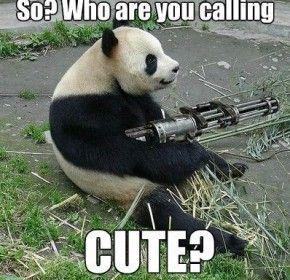 funny panda memes