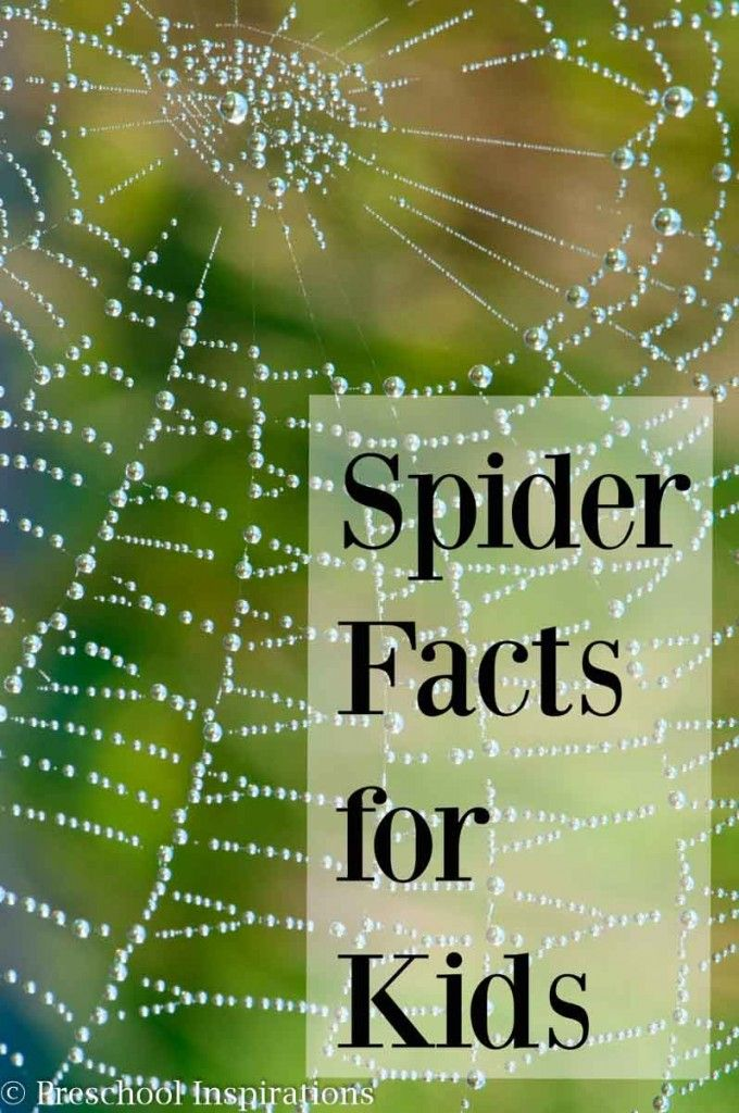 20 Fun Spider Facts for Preschoolers and kids