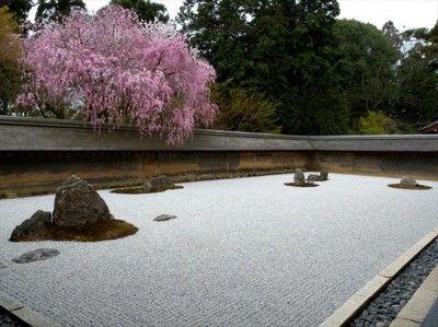 ryoanji rock garden cherry blossoms