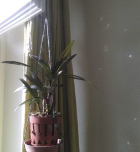 Not So Perfect – ▲▲▴▾▴▼▴▾▴▲▴▾▴▼▼▴▾▴▲▴▾▴▼▴▾▴▲▲ DIY Orchid Planter