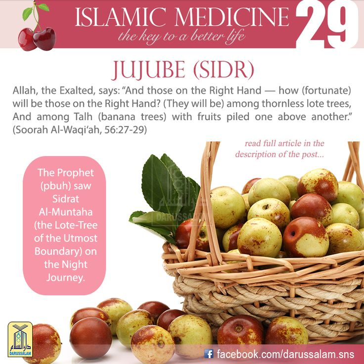 Lotus is a thorny shrub both wild and cultivated. It originates in Arabia and Yemen, and is grown in Egypt and on the coast of the Mediterranean. It belongs to the Rhamnaceae family. The fruit or jujube has a sweet taste and a nice smell. #DarussalamPublishers #IslamicMedicine #IslamicEBooks #AmazonKindle #KindleStore #BarnesAndNoble