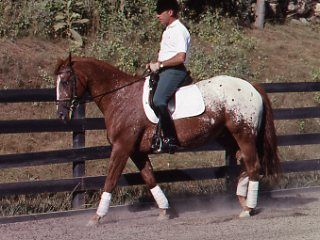 Centered Riding Revisited: The Four Basics and Grounding