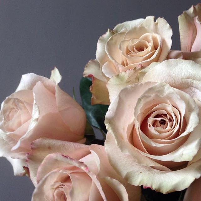 Flowers by Eileen Ting - Quicksand    The slightest hint of blush, beige or champagne...  I don't really mind which. Do you?  #blushroses  #quicksandroses #autumnlight #nofilter
