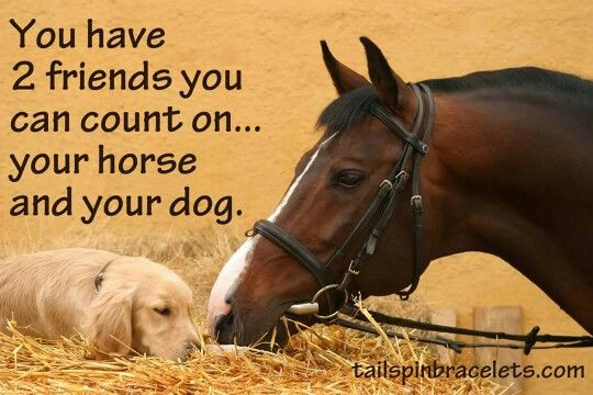 "Horse quote, ""You have two friends you can count on, your horse and your dog."""