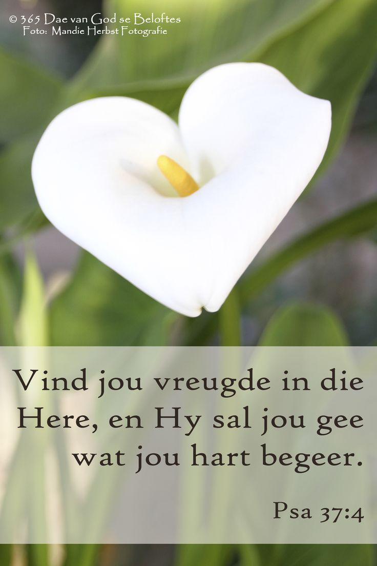 Dag 82 Bybelvers: Psalm 37:4 Vind jou vreugde in die Here, en Hy sal jou gee wat jou hart begeer.