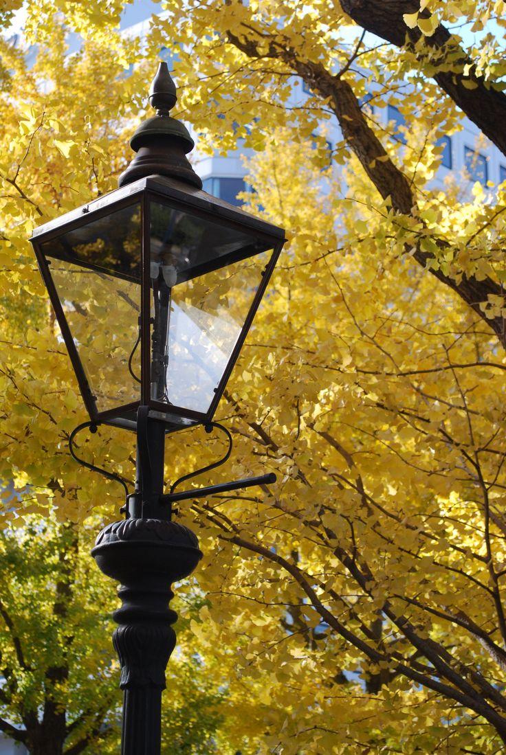 autumn in YOKOHAMA 横浜 紅葉 山下公園前