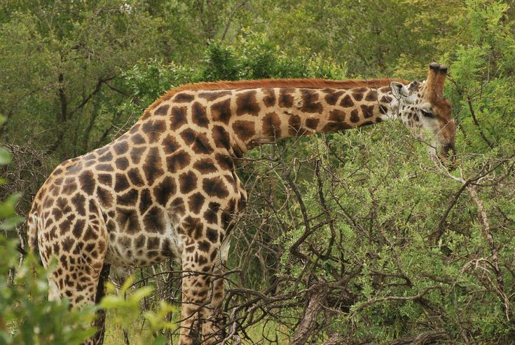 Composition Tip Change the orientation of the camera - eg try taking a giraffe in landscape instead of portrait