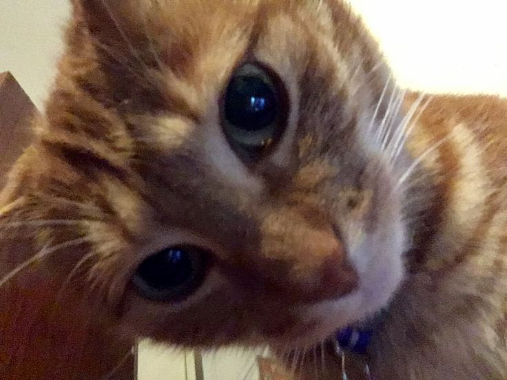 Perfect Cat Selfie #cat #selfie #pet