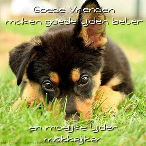 Goede vrienden maken goede tijden beter ...