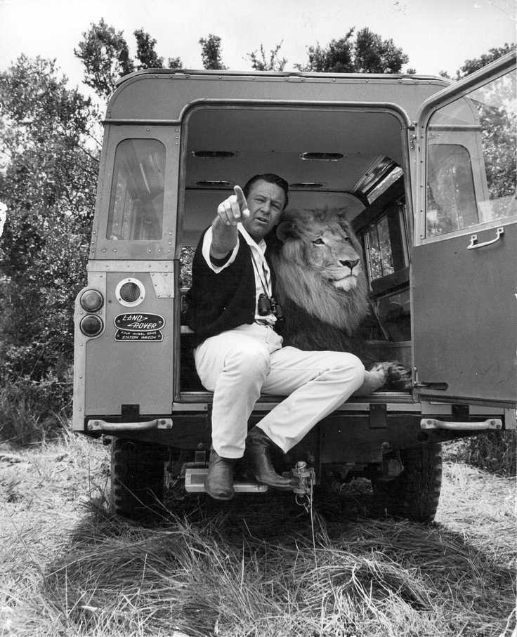 William Holden with Zamba the lion.: Land Rovers, Car, Lion, Land Rovers Jeeps Off, Animal