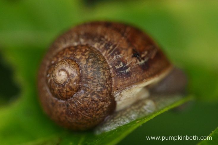 Protecting your Plants from Slugs and Snails - Pumpkin Beth