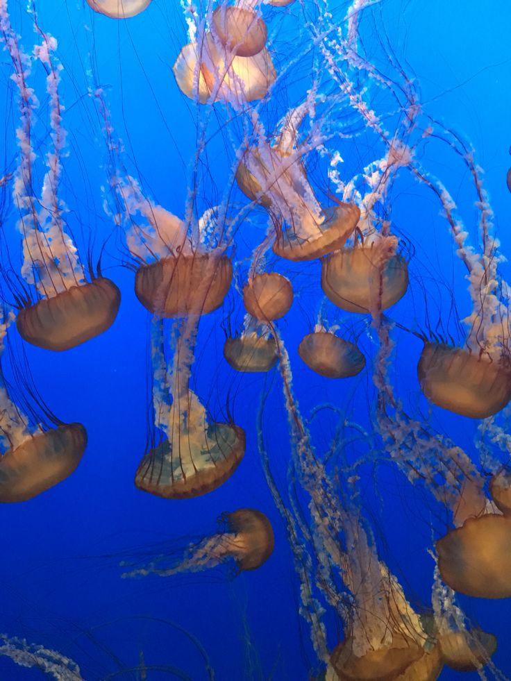monterey bay aquarium, USA