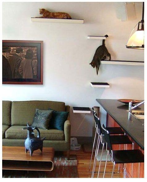 na Companhia do Gato: 7 Tips for a Cat Friendly Home