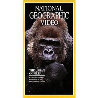 The Urban Gorilla Video | National Geographic Store The One and Only Ivan