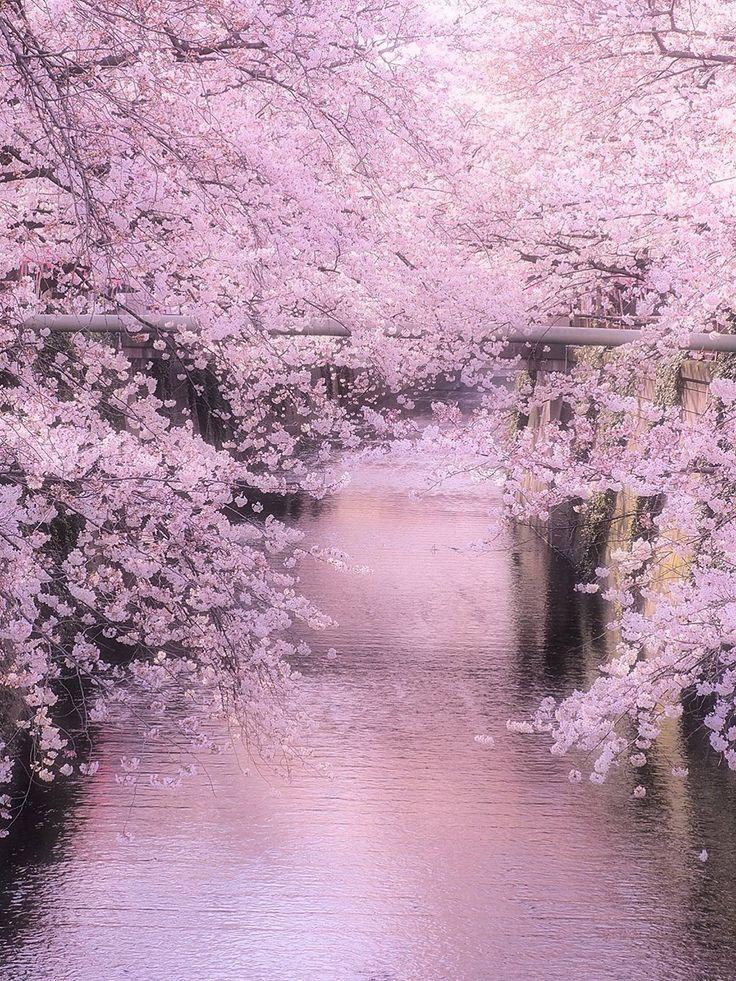 Meguro River, Tokyo, Japan | Kuniaki Tsukui 目黒川