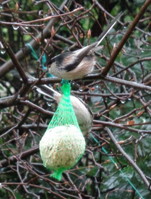 Codibugnoli nel mio giardino -  Foto-diario di una giardiniera curiosa