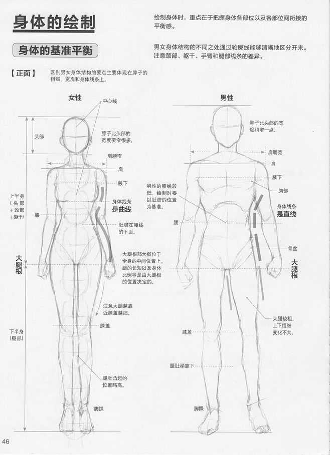Male Vs Female Anatomy References Female Anatomy Reference Anatomy Art Manga Drawing Tutorials