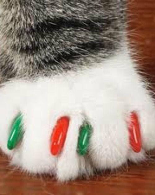 28 best cat PAWS images on Pinterest | Cat paws, Kitty cats and ...