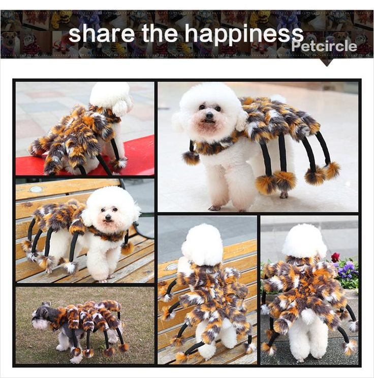 freeshipping petcircle hot pet dog clothes visual huge spider dog coats dog set for chihuahua dog costume for Halloween size S-L
