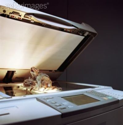 """Who says """"hmm, you what I need?  I need a stock photo of two chipmunks doing it on a photo copier?!"""""""