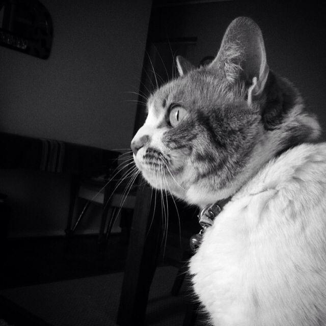 Alexa #gata #cat #chat