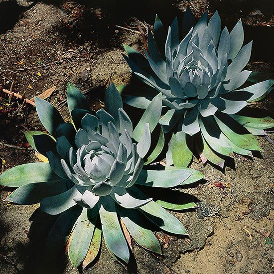 California Native Plant Landscape Design Examples: 25+ Beautiful California Native Plants Ideas On Pinterest