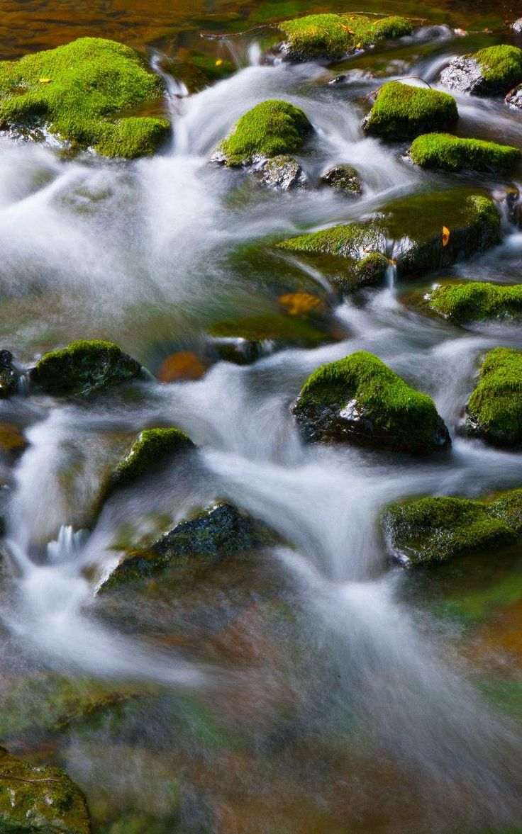 Time lapse water photography - Muir Woods National Monument, Marin County California