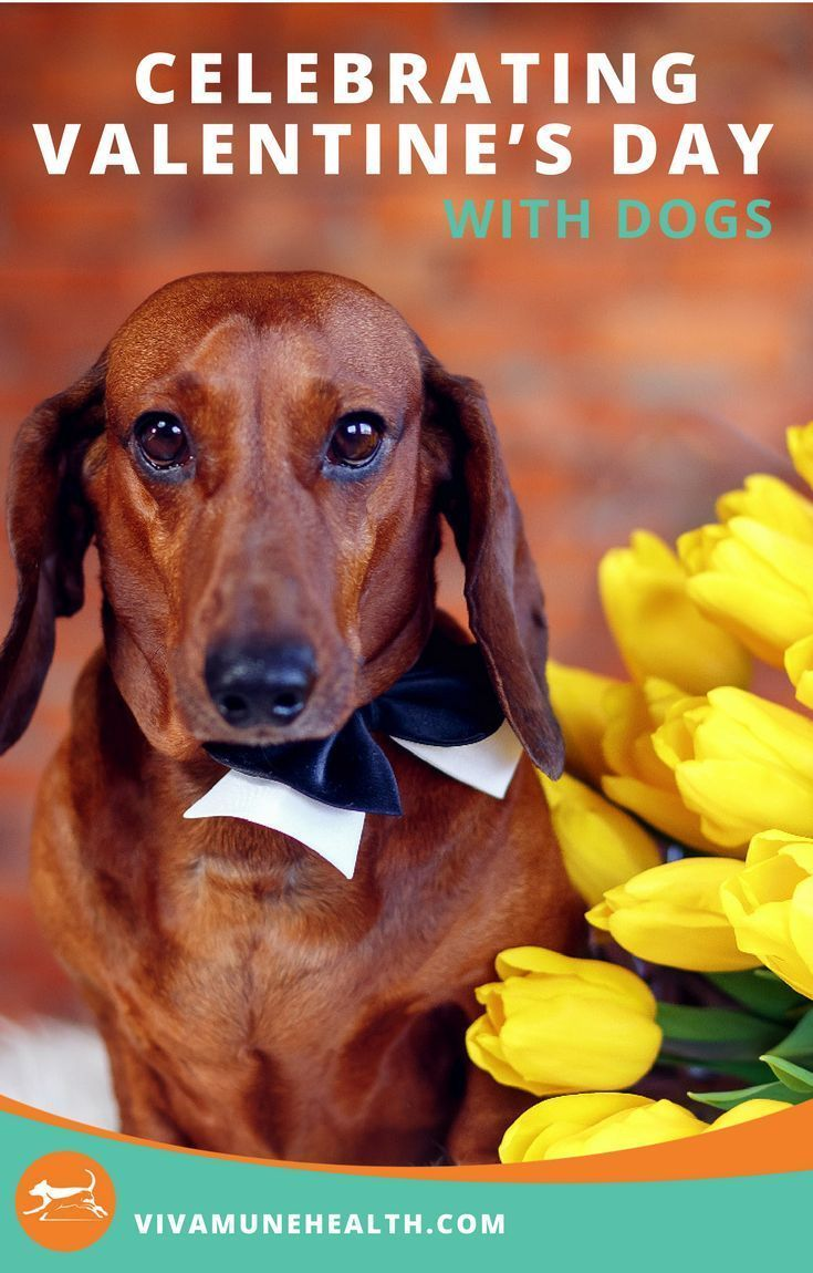 Celebrating Valentine S Day With Dogs Pet Insurance Reviews