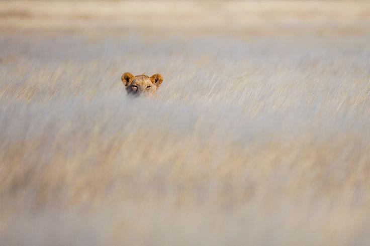 Hidden Danger by Andrew Aveley